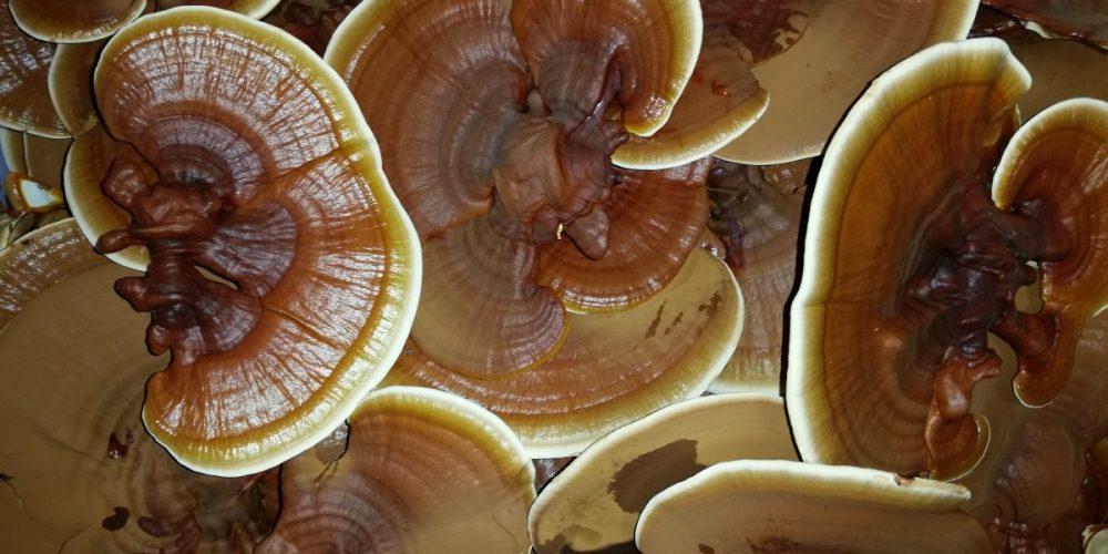Nebraska Mushroom: Inspired by Passion